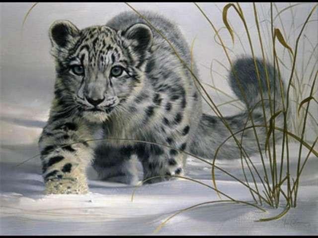 فهود اسود ونمور برية الحيوانات المفترسة feline23.jpg