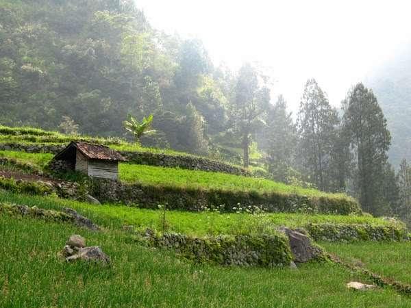 peace, kedamaian, gambar kampung, kampung, lereng bukit, forest, keindahan alam, kedamaian, kedamaian yang kupinta,